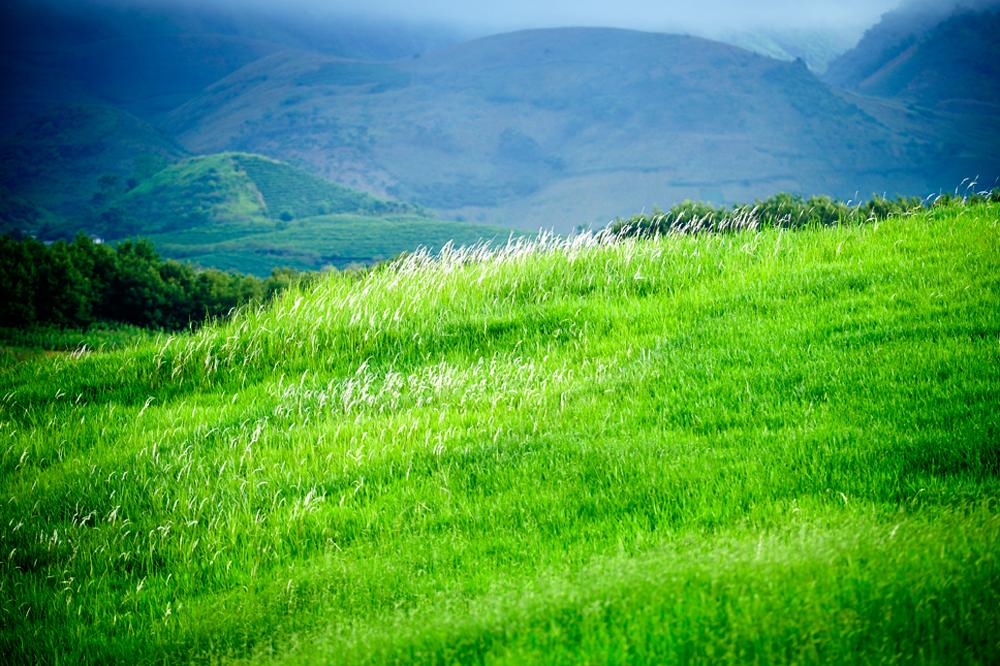 Thảo nguyên Mộc Châu