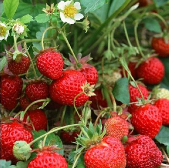 10 loại trái cây 'rẻ bèo' ăn mỗi ngày sẽ ngừa nhiều bệnh tật nhất là ung thư - Ảnh 2
