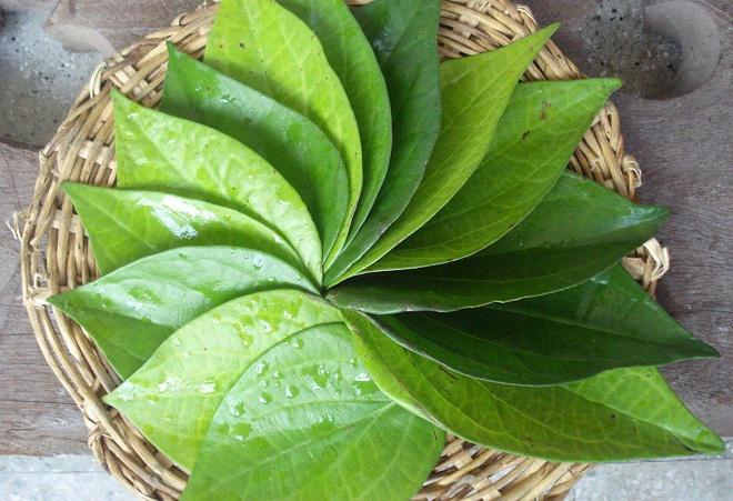 Nám tàn nhang sâu đến đâu cũng hết sạch, trẻ hơn 10 tuổi chỉ nhờ loại lá này mà không cần uống collagen - Ảnh 3