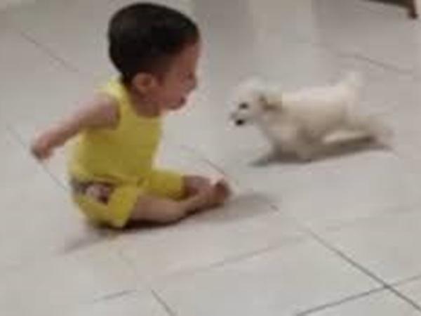 Clip em bé khuyết tật chơi đùa với chú cún con khiến người xem rơi nước mắt