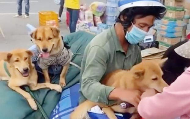 Chó, mèo, vật nuôi có làm lây nhiễm COVID-19 sang cho người không? - Ảnh 1