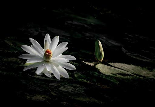 Vô thường là gì? Ý nghĩa và lợi ích của vô thường trong cuộc sống - Ảnh 3