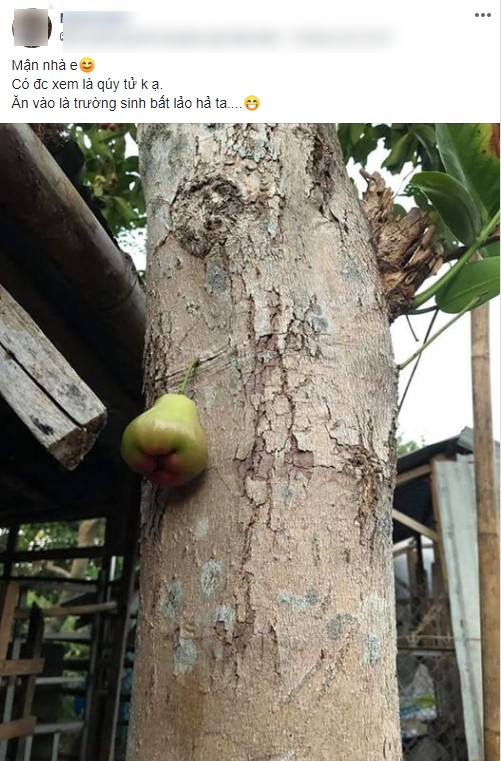 Quả roi 'tự kỷ' một mình chiếm vị trí độc tôn ngay giữa thân cây, dân mạng liền trêu: 'Chắc chỉ để ngắm chứ chẳng nỡ ăn?' - Ảnh 1