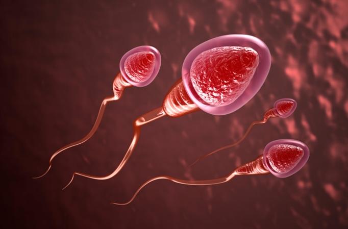 7 cách thụ thai nhanh nhất, các cặp vợ chồng mới cưới nên tham khảo - Ảnh 1