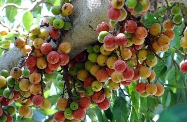 Những loại hoa quả 'vàng' tốt hơn thuốc bổ cho phụ nữ sau sinh - Ảnh 2