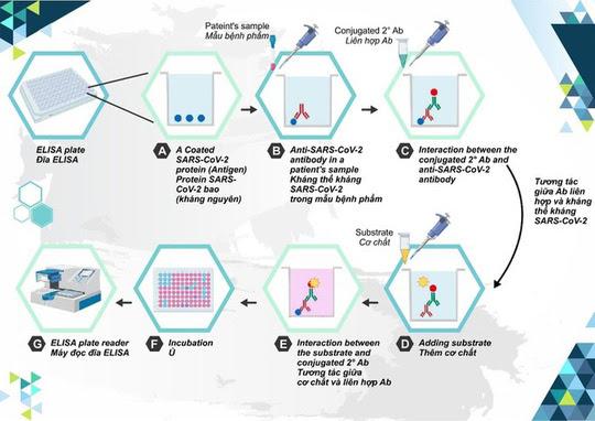 30 triệu liều vaccine COVID-19 Hayat-Vax của Trung Quốc được cấp phép nhập khẩu - Ảnh 3
