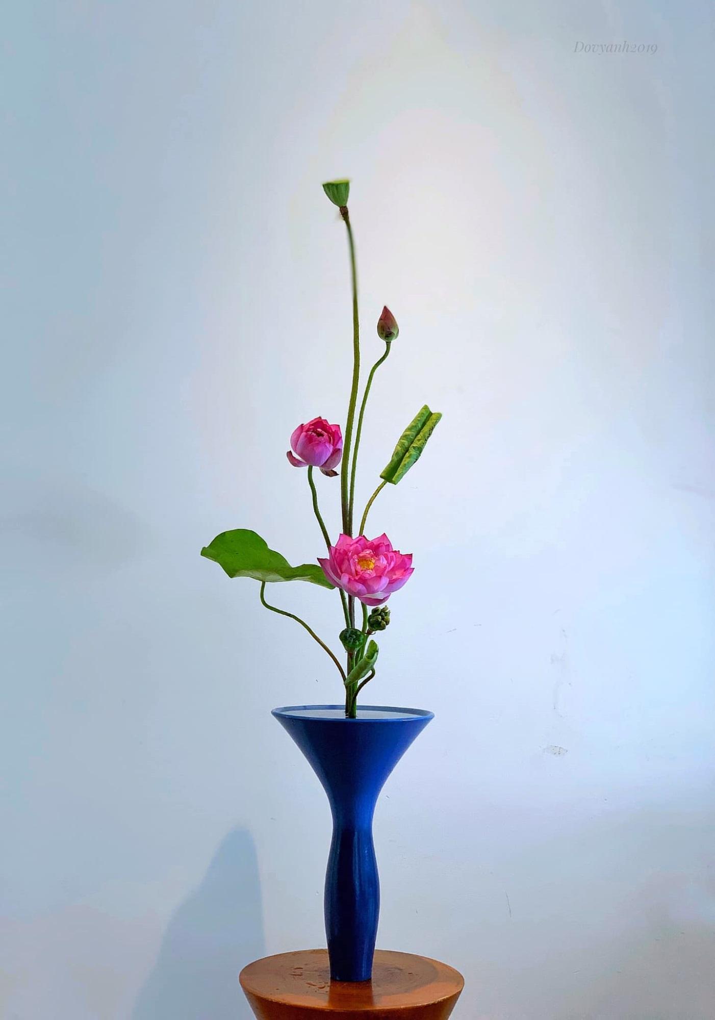 hoa sen 5