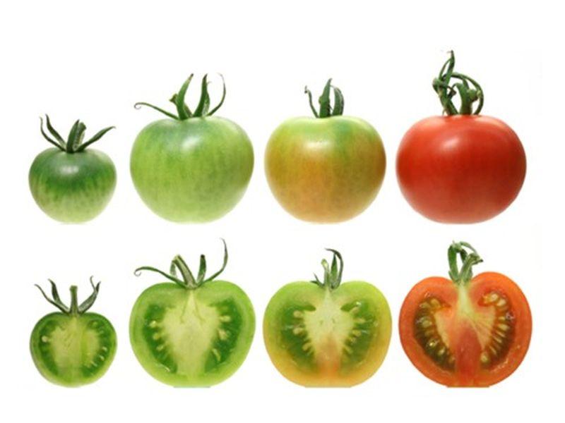 Bác sĩ nhắc nhở: 4 loại rau được mệnh danh là 'vũ khí hại gan' khuyên mọi người ăn càng ít càng tốt - Ảnh 3