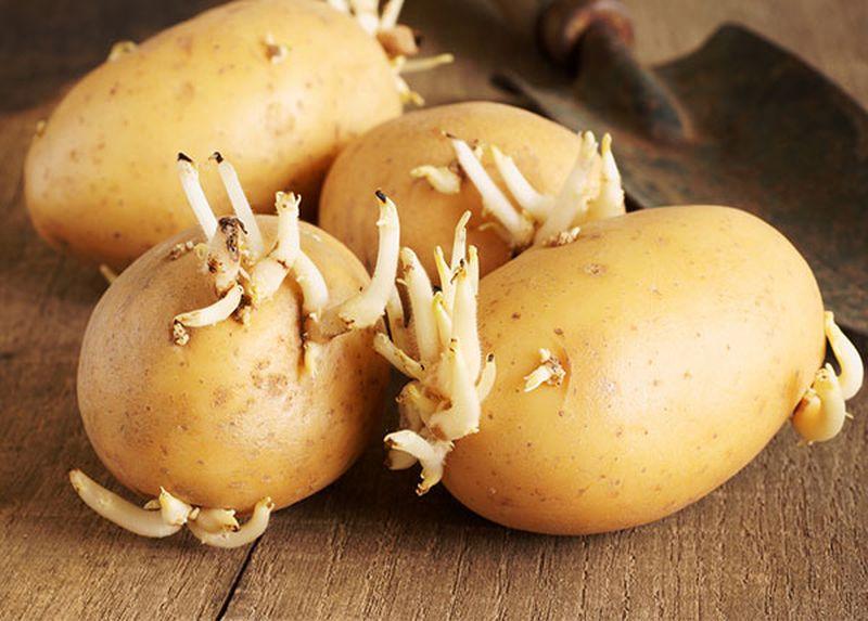 Bác sĩ nhắc nhở: 4 loại rau được mệnh danh là 'vũ khí hại gan' khuyên mọi người ăn càng ít càng tốt - Ảnh 1