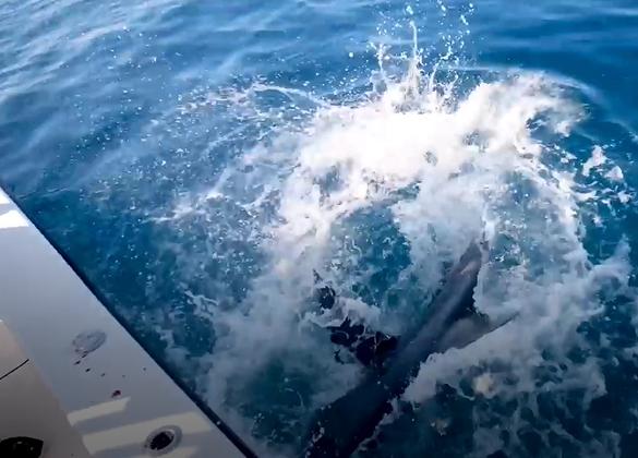 Loạt đệ nhất cần thủ thi nhau dùng cung tên bắn xuống biển 'dọa cá' và cái kết làm người xem trầm trồ