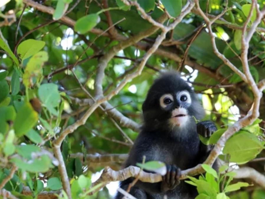 Cứu chú khỉ con, khoảng 2 tháng sau hơn 20 người thoát chết trong gang tấc