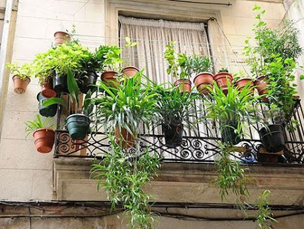 Gia đình giàu có thường trồng hoa ban công theo phong thủy thế nào để hút sạch tài lộc trong thiên hạ?