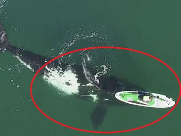 Cá voi dài hơn 15 mét HUÝCH chiếc thuyền của người phụ nữ giữa biển khơi, cuộc chạm trán HIẾM HOI và cái kết vô cùng bất ngờ