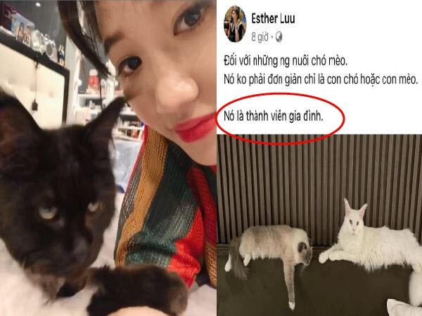 Hari Won đăng status ẩn ý giữa ồn ào cô gái chở mèo đi khám mùa dịch, dân mạng gay gắt: 'Nghĩ đến con mèo sao không nghĩ cho cả nước'