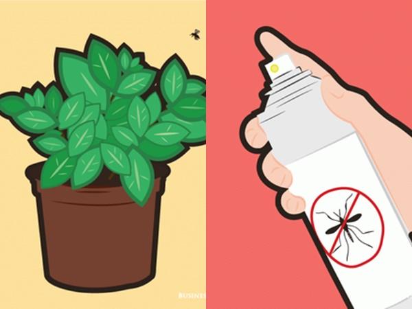 7 quan niệm sai lầm về phòng tránh muỗi: Hóa ra trồng sả có thể phản tác dụng