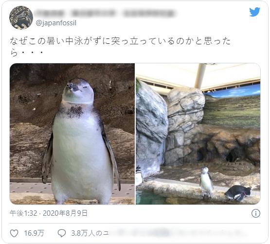 Khách tham quan thủy cung Nhật Bản thấy chú chim cánh cụt đứng bất động như hóa đá, nhìn lên trần nhà mới vỡ lẽ lý do lạ kỳ - Ảnh 2