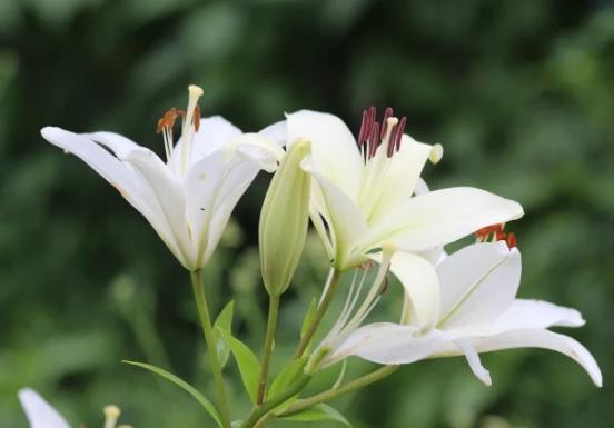 5 loài hoa kiêng kị đặt lên bàn thờ ngày rằm tháng 7 tránh tán tài tán lộc, xui xẻo kéo đến - Ảnh 2