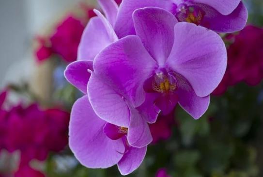 5 loài hoa kiêng kị đặt lên bàn thờ ngày rằm tháng 7 tránh tán tài tán lộc, xui xẻo kéo đến - Ảnh 3