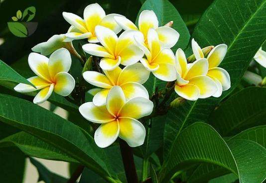 5 loài hoa kiêng kị đặt lên bàn thờ ngày rằm tháng 7 tránh tán tài tán lộc, xui xẻo kéo đến - Ảnh 4