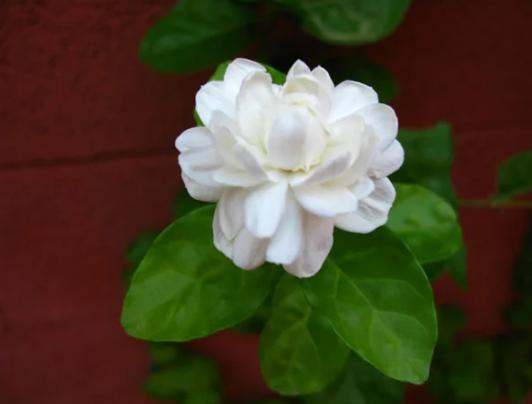 5 loài hoa kiêng kị đặt lên bàn thờ ngày rằm tháng 7 tránh tán tài tán lộc, xui xẻo kéo đến - Ảnh 5