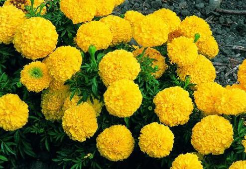 5 loài hoa kiêng kị đặt lên bàn thờ ngày rằm tháng 7 tránh tán tài tán lộc, xui xẻo kéo đến - Ảnh 6