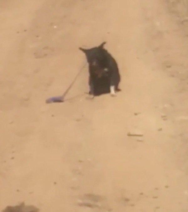 Lái xe trên đường gặp chú chó lạc chủ, tài xế đến giúp thì con vật từ chối, định rời đi trước khi hốt hoảng thấy cảnh tượng gần đó - Ảnh 2