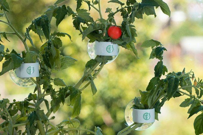 Biến nhà bạn thành một khu vườn sáng bừng sức sống từ những vật dụng tái chế chỉ nhờ bộ dụng cụ đơn giản này - Ảnh 4
