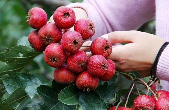 Ăn nhiều 1 loại rau, tránh 3 loại quả để cơ thể khỏe mạnh chống lại bệnh vặt vào mùa đông - Ảnh 4