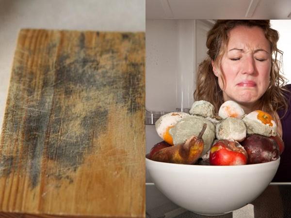 Nấm mốc thường ẩn náu nhiều nhất trong nhà bếp của bạn, nhất là 3 chỗ mà bạn chẳng ngờ đến