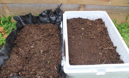 Ngày cuối tuần rảnh rỗi, lấy vài thùng xốp bỏ đi trồng cải thảo theo cách này, quanh năm có rau sạch ăn không hết - Ảnh 2