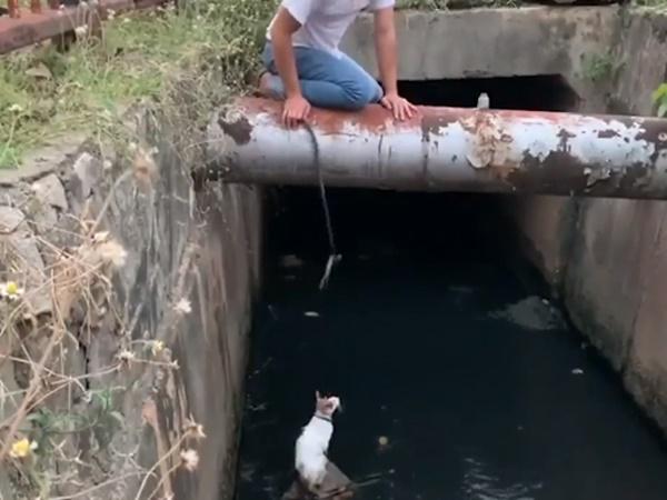 Thấy mèo con rớt xuống kênh, nam thanh niên liều mình treo ngược người trên không để giải cứu
