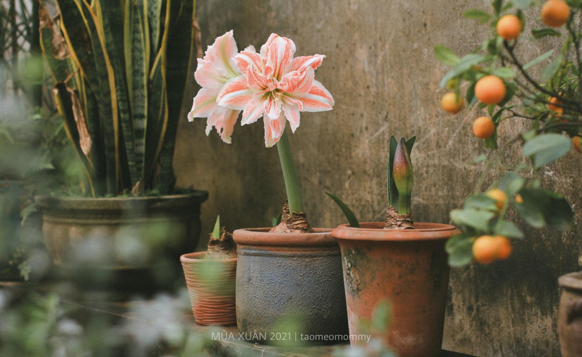 hoa lan hue 1
