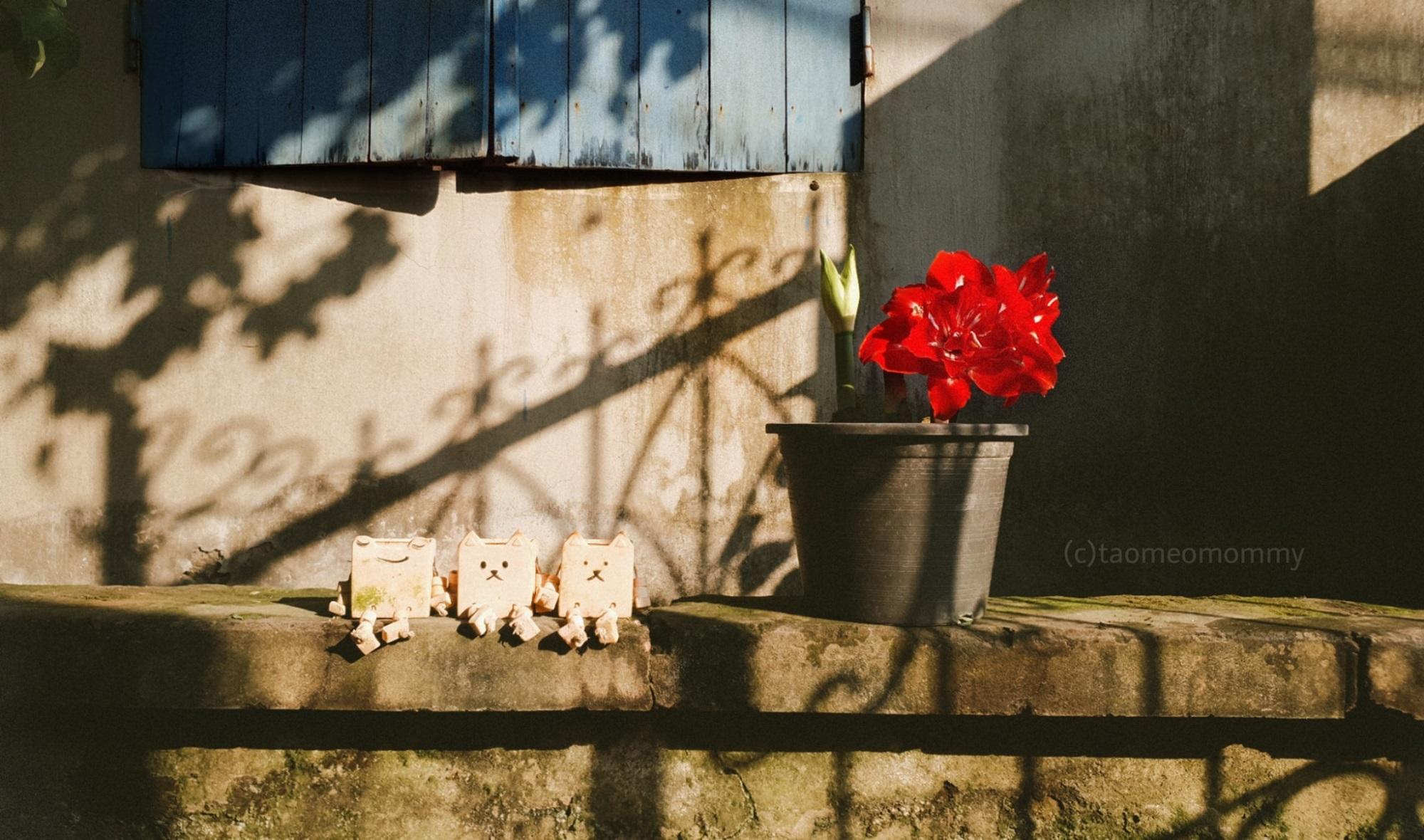 hoa lan hue 6