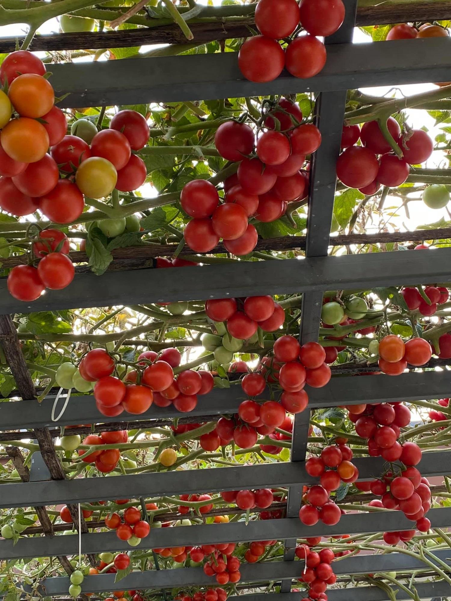 Đã con mắt trước 'khu vườn trên mây' 100m2 của mẹ đảm, rau trái 4 mùa ăn cả năm không hết - Ảnh 3