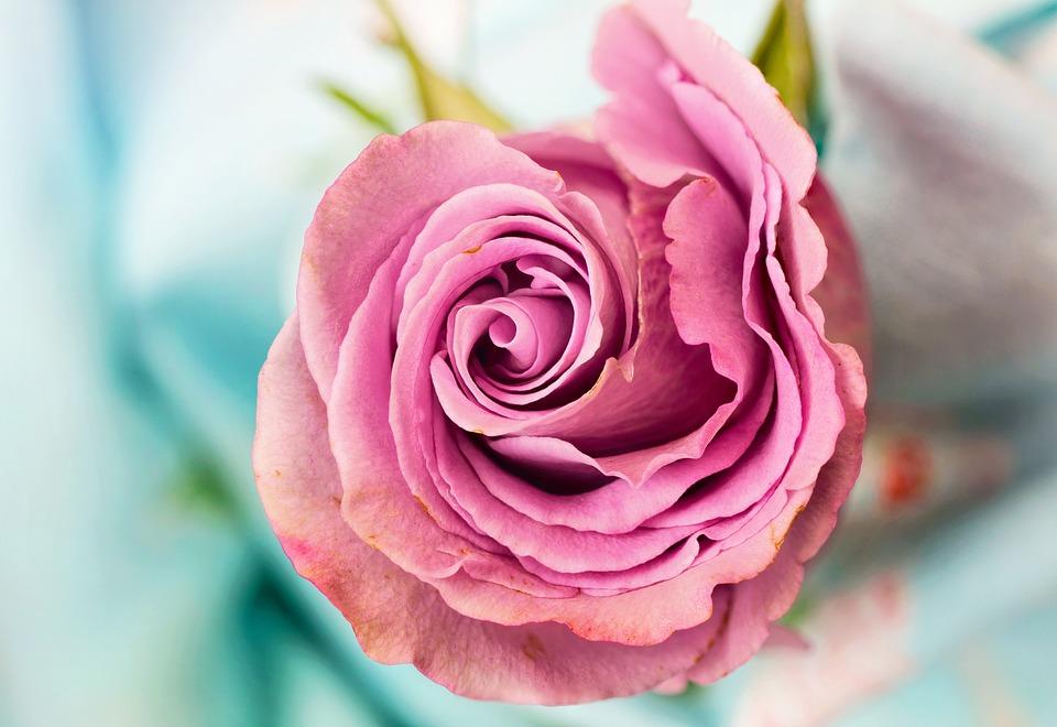 Đừng chỉ tặng hoa vào ngày 8/3 cho bạn gái
