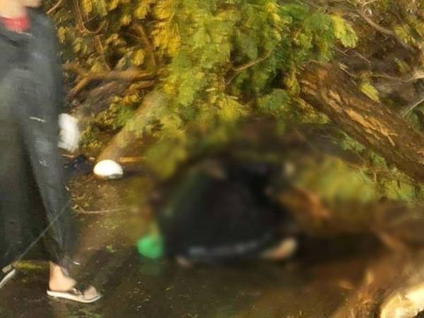 NÓNG: Nhánh cây to bị gãy, đè chết người đàn ông đi xe máy ở Sài Gòn