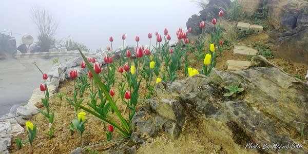 Ông bố người Tày 'liều' thuê cả đồi đá Mã Pì Lèng trồng hoa tulip khiến bao người trầm trồ - Ảnh 2