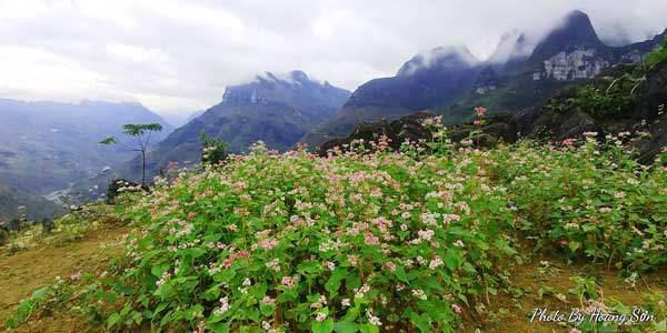 Ông bố người Tày 'liều' thuê cả đồi đá Mã Pì Lèng trồng hoa tulip khiến bao người trầm trồ - Ảnh 14