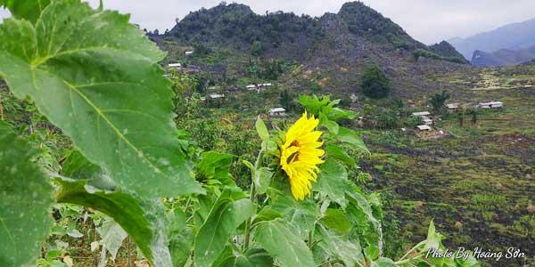 Ông bố người Tày 'liều' thuê cả đồi đá Mã Pì Lèng trồng hoa tulip khiến bao người trầm trồ - Ảnh 16