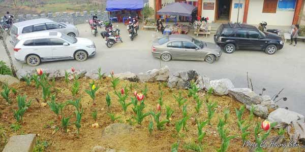 Ông bố người Tày 'liều' thuê cả đồi đá Mã Pì Lèng trồng hoa tulip khiến bao người trầm trồ - Ảnh 6