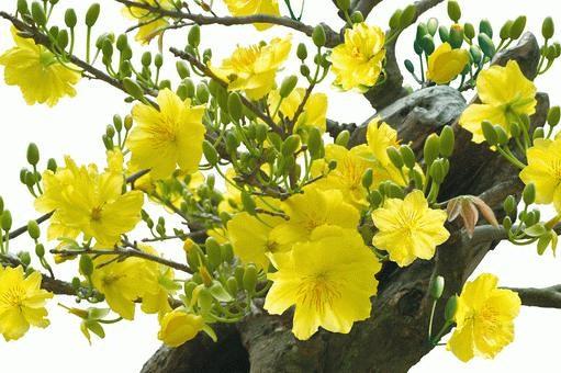 Những loài hoa gia chủ nên chưng trong nhà ngày Tết để gia tăng tài lộc, vận khí cho gia đình - Ảnh 1