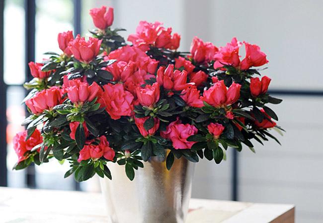 Những loài hoa gia chủ nên chưng trong nhà ngày Tết để gia tăng tài lộc, vận khí cho gia đình - Ảnh 2