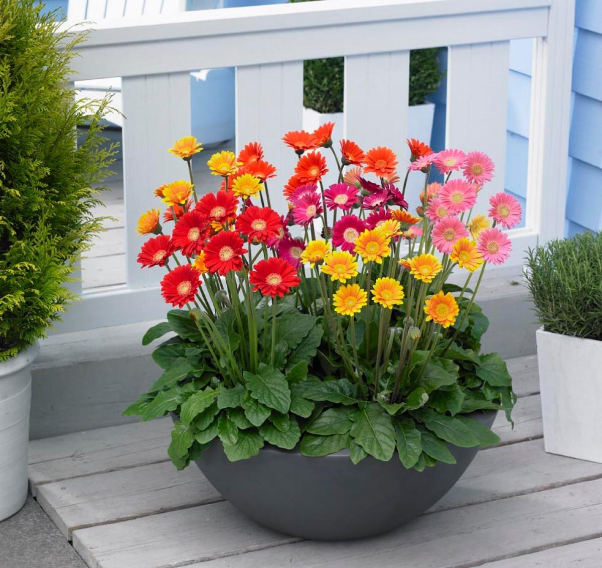 Những loài hoa gia chủ nên chưng trong nhà ngày Tết để gia tăng tài lộc, vận khí cho gia đình - Ảnh 4