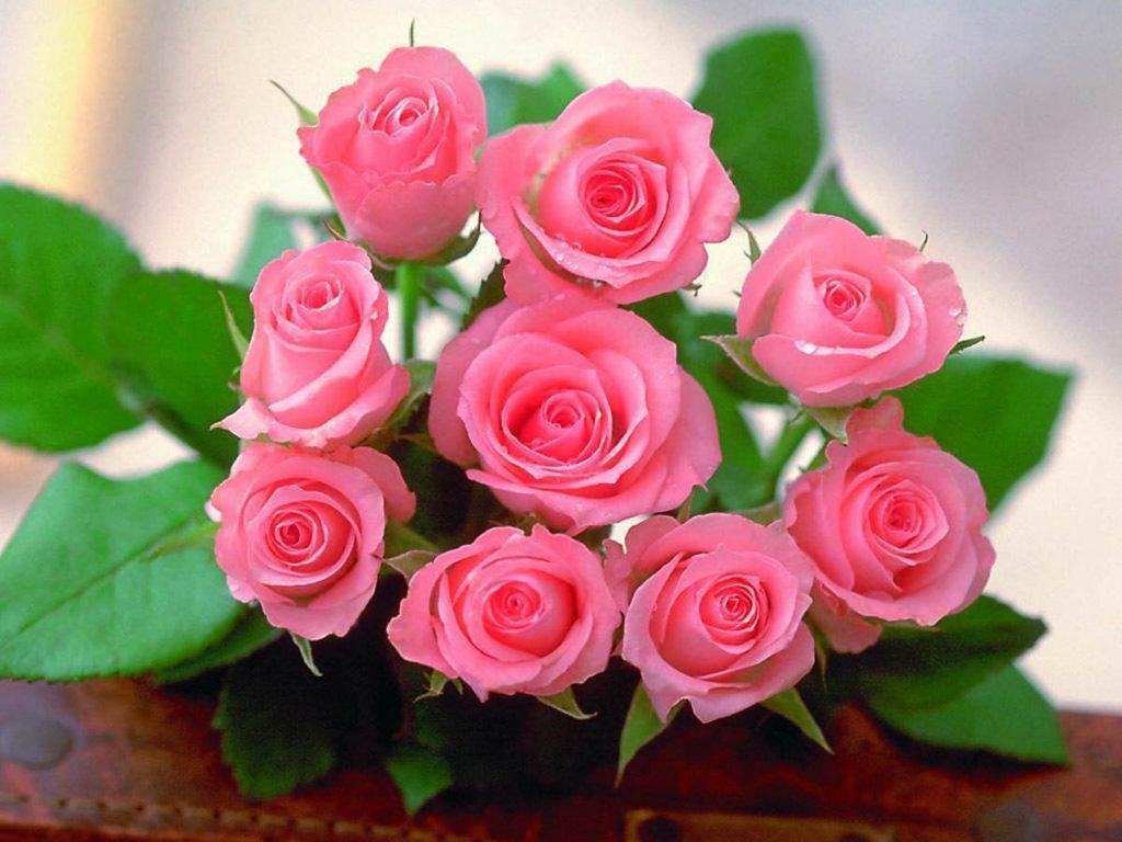 Những loài hoa gia chủ nên chưng trong nhà ngày Tết để gia tăng tài lộc, vận khí cho gia đình - Ảnh 6