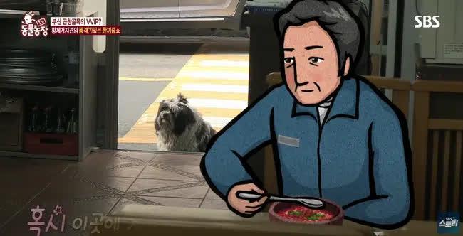 Chú chó tăng cân trông thấy nhờ hành trình đến 'ăn chực' 7 cửa hàng mỗi ngày, tưởng là hành động tinh ranh nhưng hóa ra là chuyện buồn của con vật - Ảnh 8