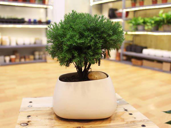 12 loại cây cảnh trồng trong nhà hợp phong thủy với từng tuổi năm Canh Tý 2020 - Ảnh 10
