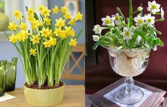 5 loại cây có hoa đẹp nhưng lại chứa đầy độc tố, đừng dại mang về trồng quanh nhà - Ảnh 1