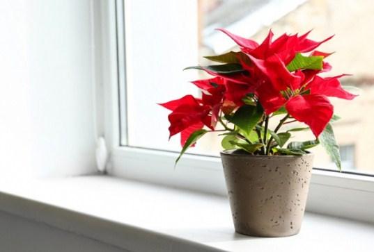 5 loại cây có hoa đẹp nhưng lại chứa đầy độc tố, đừng dại mang về trồng quanh nhà - Ảnh 2