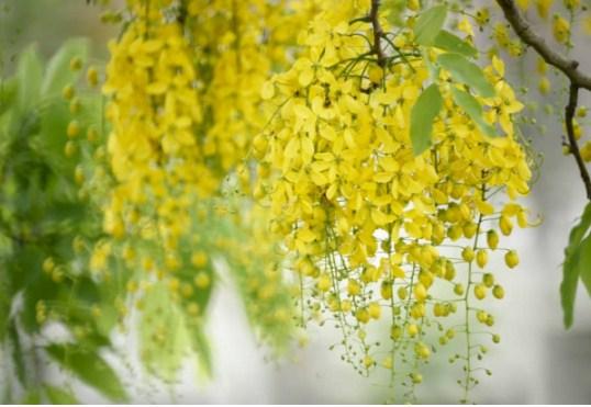 5 loại cây có hoa đẹp nhưng lại chứa đầy độc tố, đừng dại mang về trồng quanh nhà - Ảnh 4