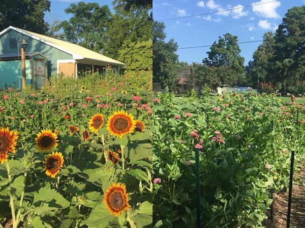 Cô gái trẻ trồng cả vườn rau và hoa theo phương pháp hữu cơ vì yêu thích sống trong không gian xanh